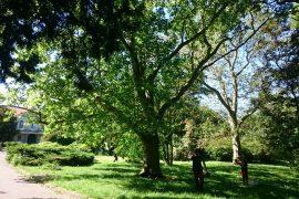SOŠ záhradnícka Gustáva Čejku - Ošetrenie stromov v Malinovskom parku