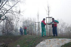 OZ Historická spoločnosť Ivanky - Vysadenie aleje k pamätníku Milana Rastislava Štefánika
